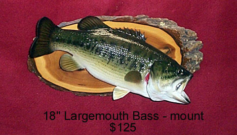 Simpson Taxidermy For Sale Page