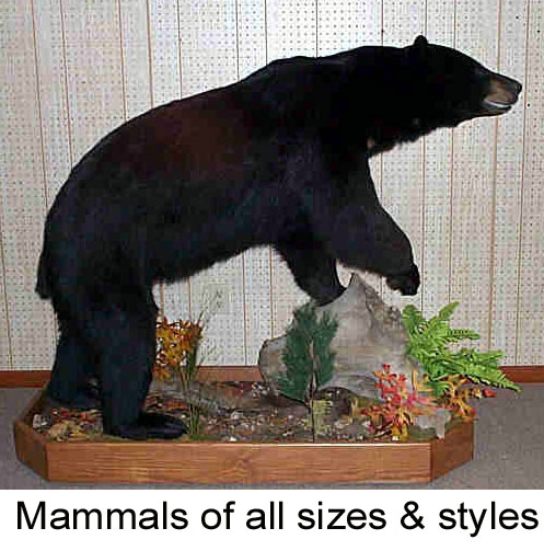 Welcome To Simpson Taxidermy Studio On-line