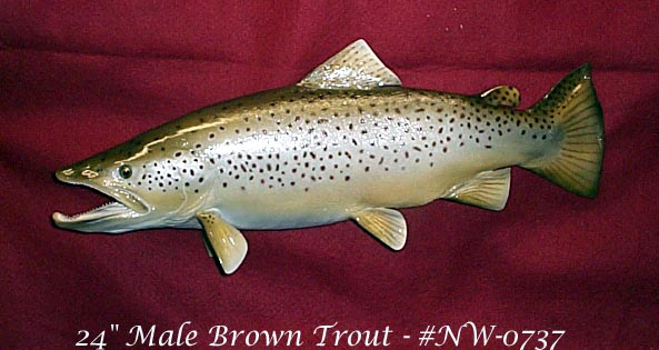 Brown Trout - male