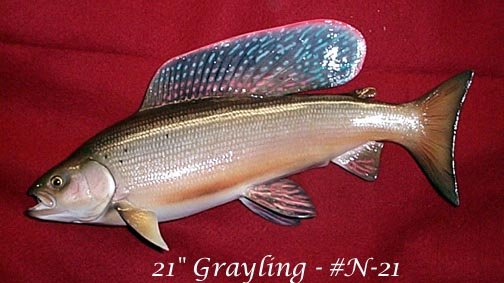 Artic Grayling