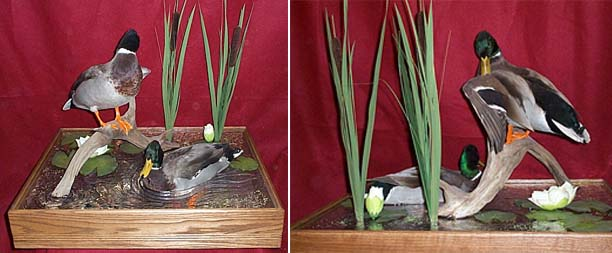 Simple Bill Of Sale >> Simpson Taxidermy Studio - Bird mounts
